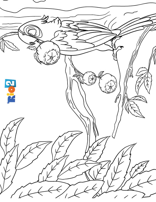 Rio 2 coloring page to print